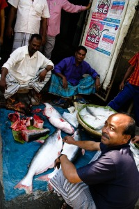 Big catch - New Market, Rajshahi