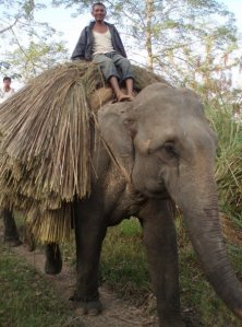 Elephant safaris in Chitwan are by far the safest option - but at the time I didn't know they existed!