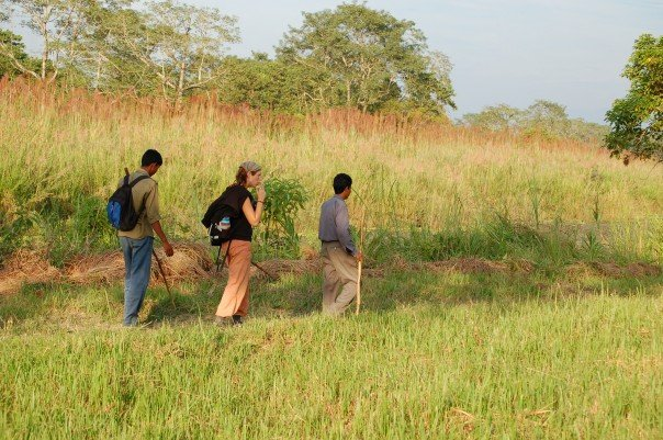 Image result for jungle walk in chitwan