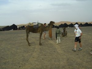 A camel in the Sahara