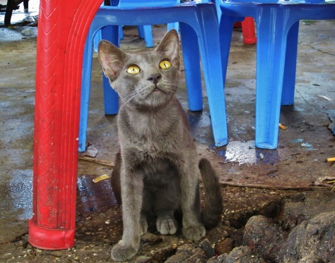 A beautiful street cat in Yangon
