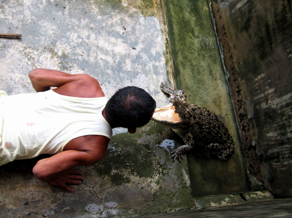 Tricks at Thaketa crocodile farm