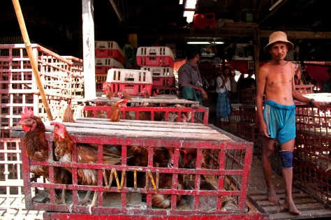 Yangon's chicken and duck market