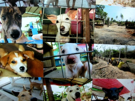 Puppies and dogs rescued by Yangon Animal Shelter