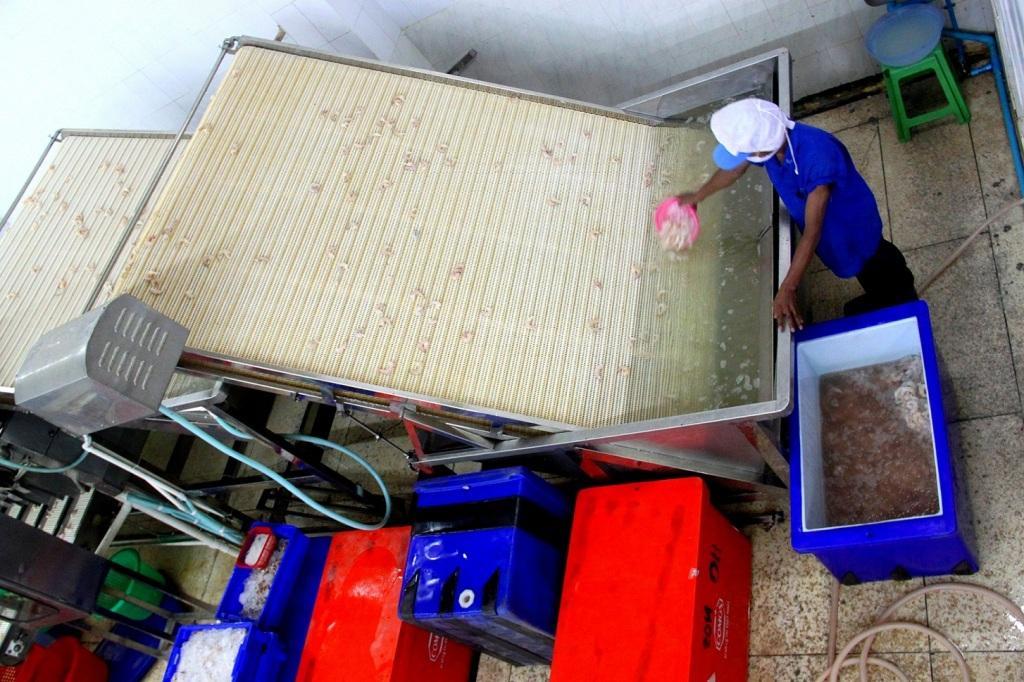 Ocean Harvest's shrimp size classifying machine