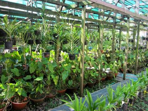 U Khin Nyunt's orchids
