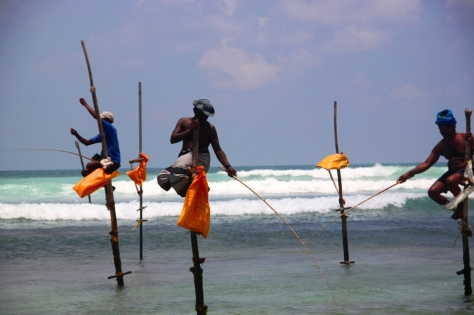 Stilt fishing in Weligama
