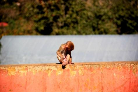 A mischievous baby monkey