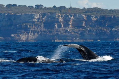 The scenery is gorgeous too. Photo: Go Whale Watching