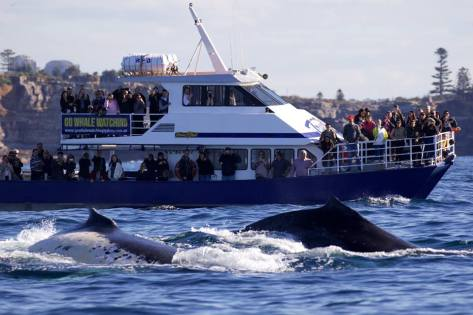 Photo supplied by Go Whale Watching.