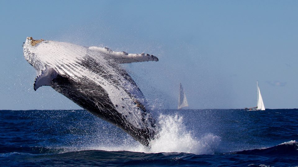 You amazing creature, you. Photo: Go Whale Watching